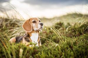 Sylt gilt als Hundeparadies