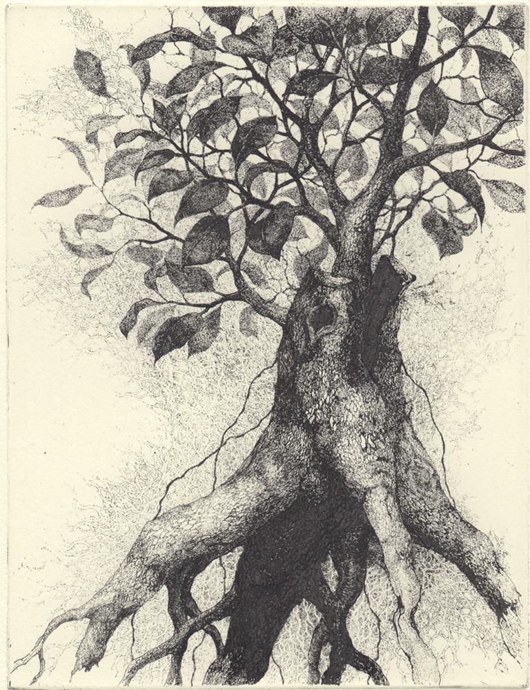 「ガジュマルの樹」2018年/銅版画(エッチング)/170x130mm