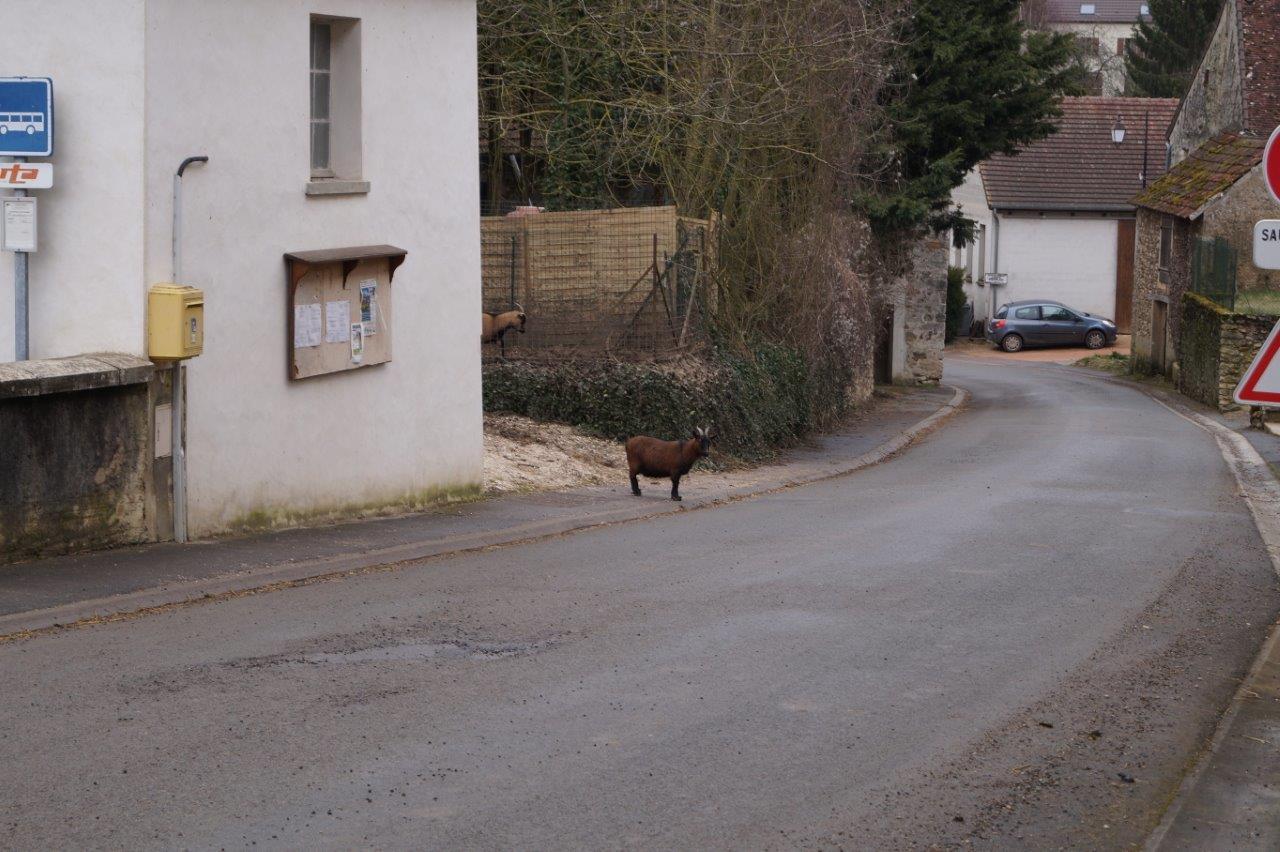 Je regarde avant de traverser la rue.