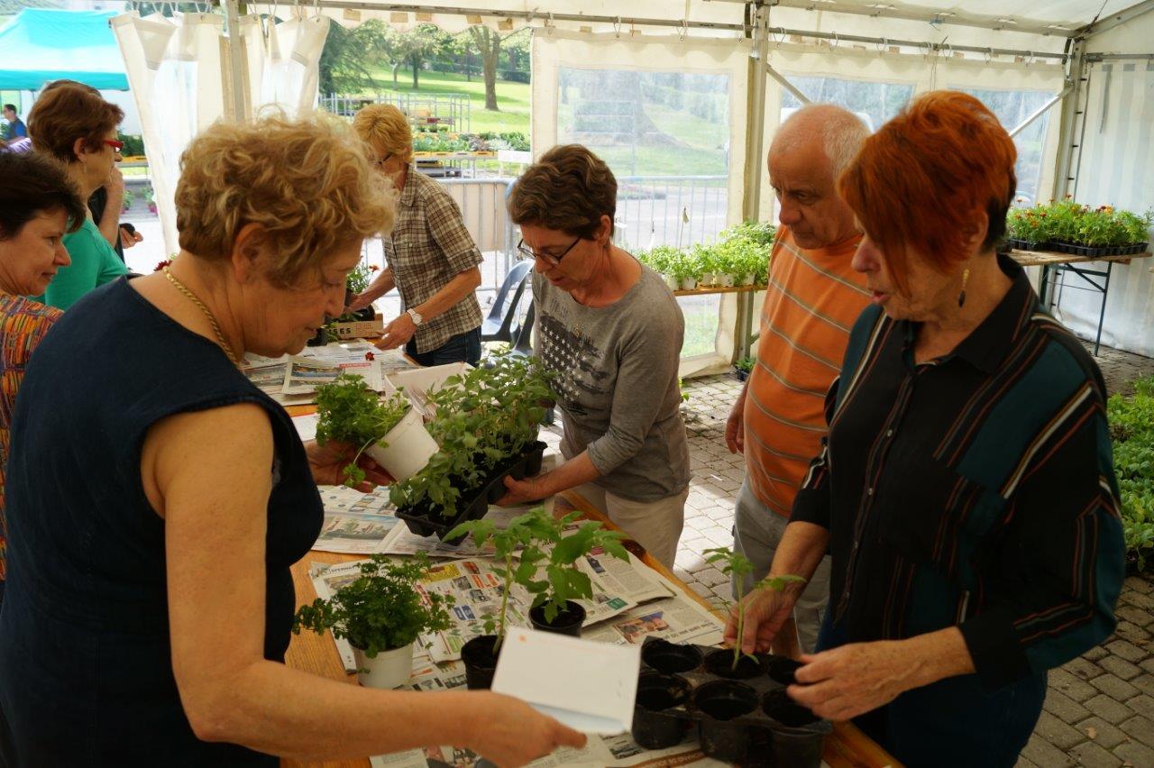 Des enveloppes gagnantes permettent de repartir avec un ou plusieurs plants préparés durant l'hiver par l'association dormaniste.