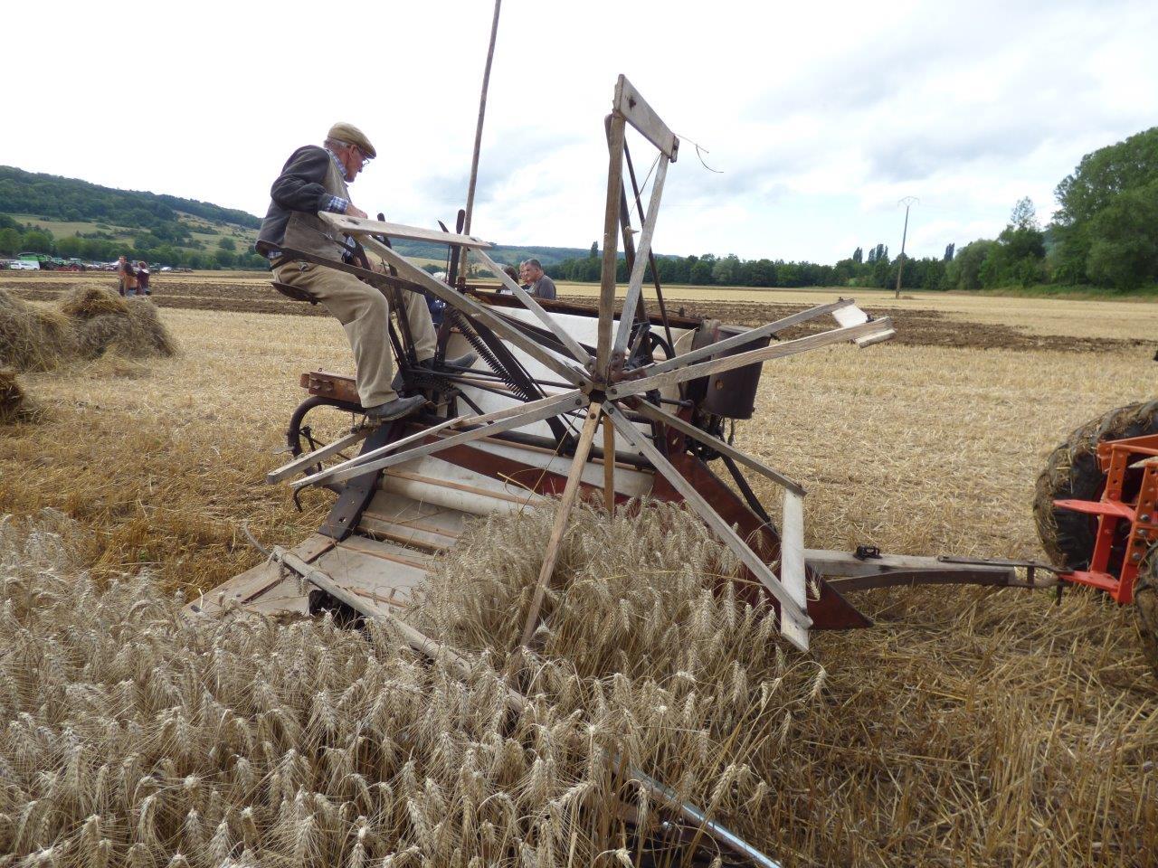 La lieuse fauche le blé, mais également lie les gerbes de blé en tas...
