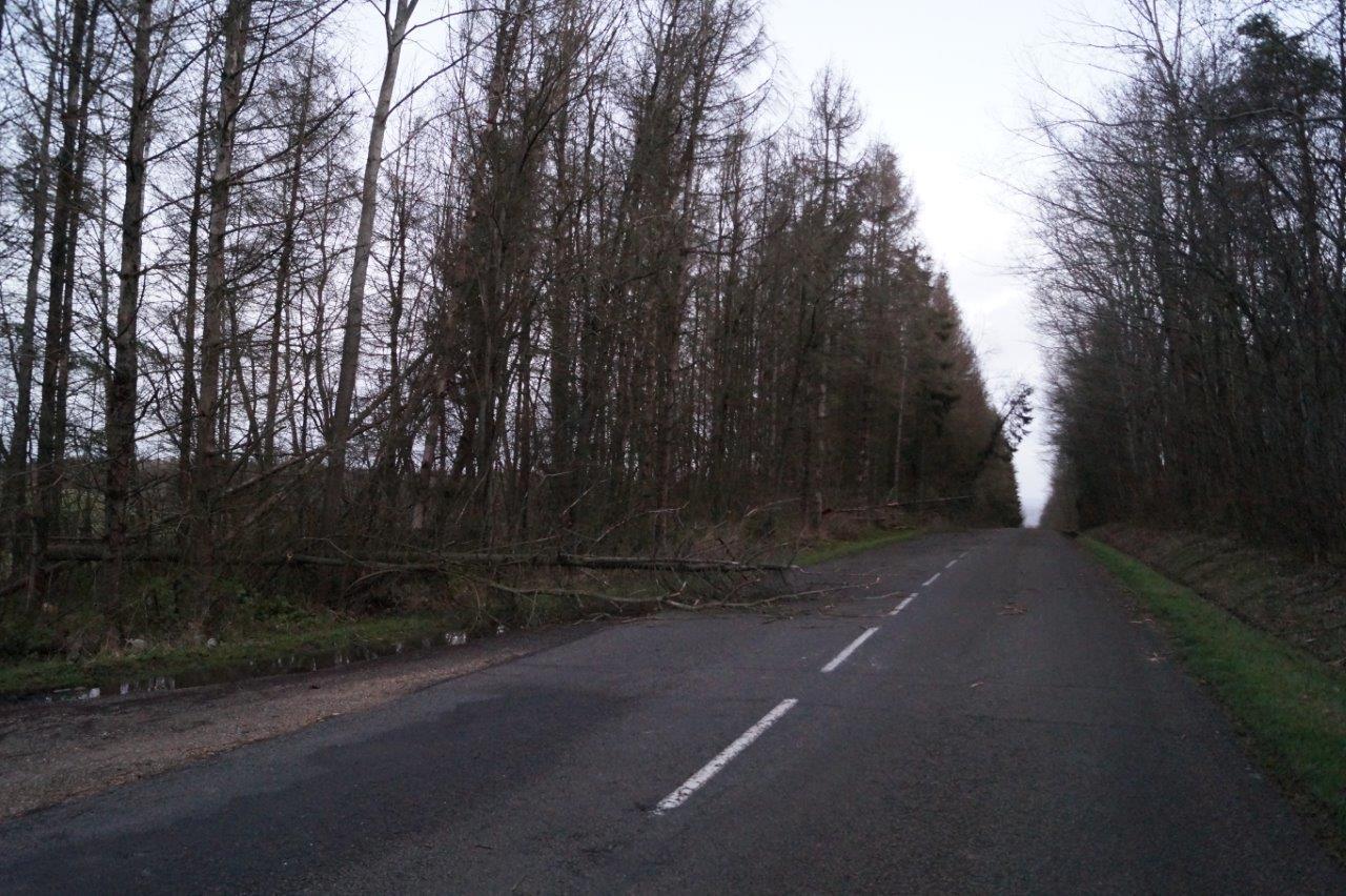 Les véhicules ont roulé avec prudence à l'approche des arbres tombés à terre.