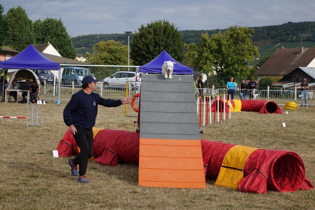 Le maître guide et le chien doivent être particulièrement agiles pour se jouer des obstacles...