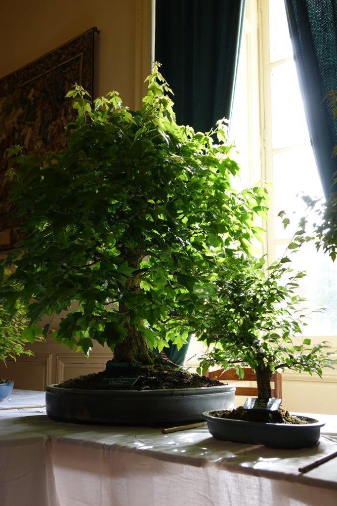Une magnifique collection de bonsaïs est visible au premier étage du château...