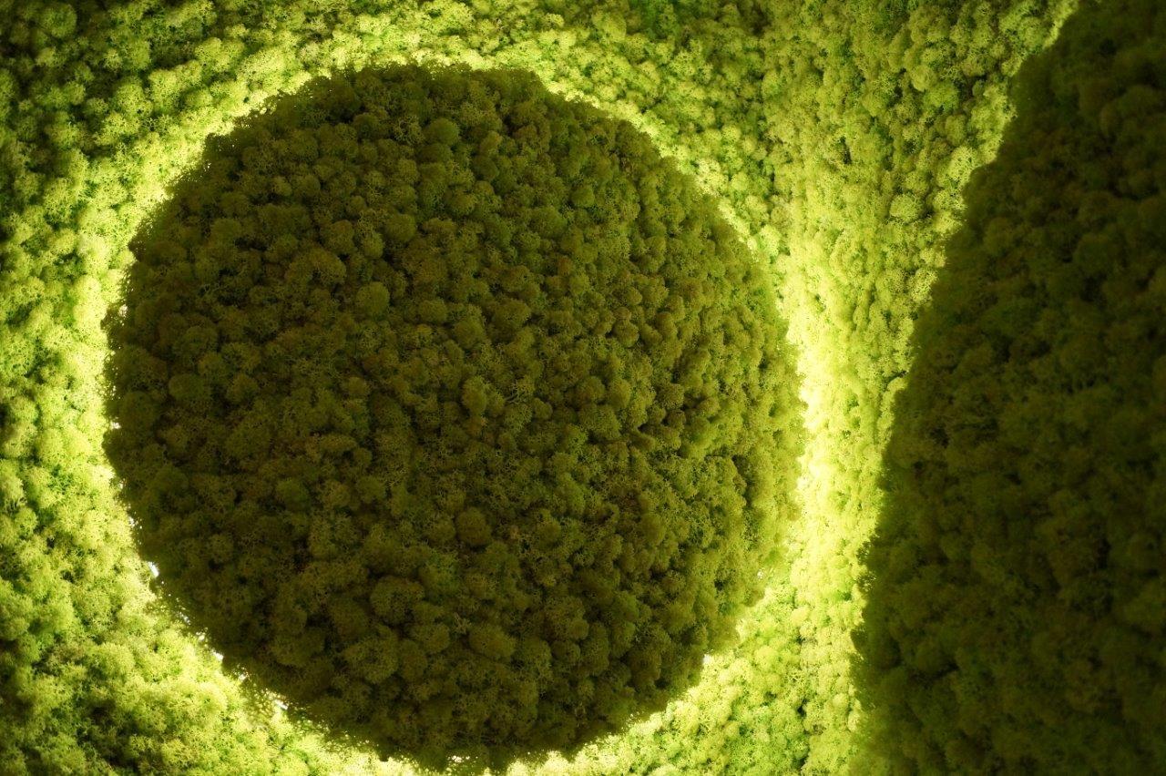 Le mur végétal ne passe pas inaperçu !