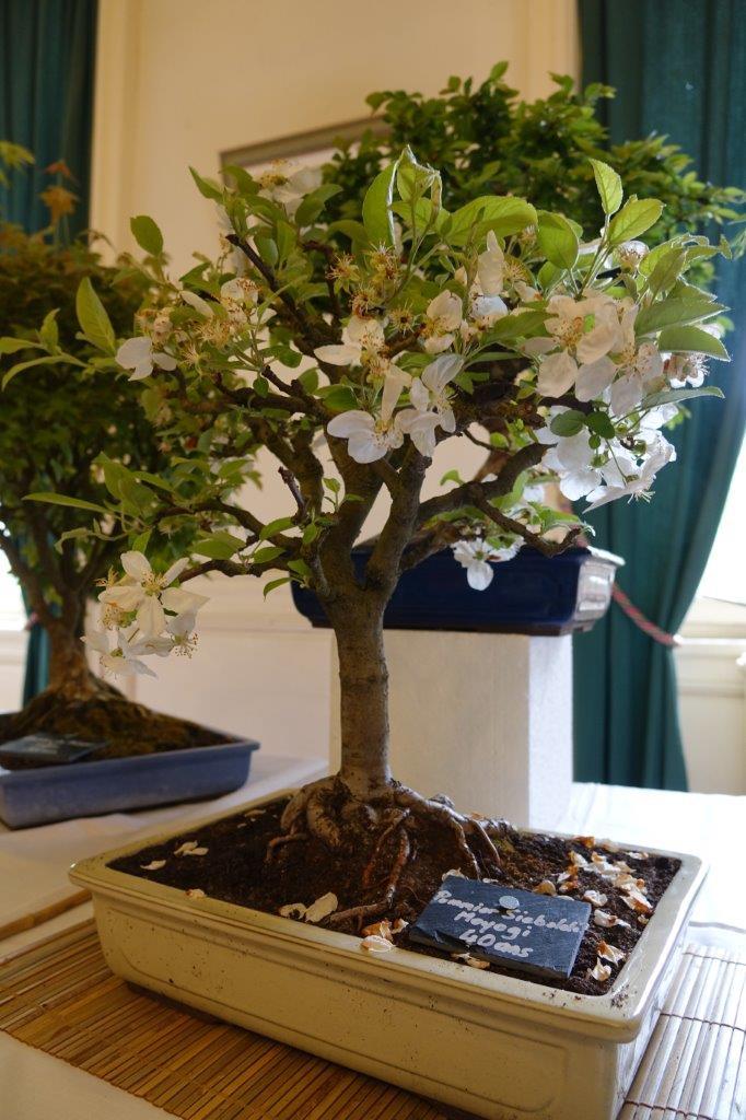 Une magnifique collection de bonsaïs est présentée depuis plusieurs années au premier étage du château...