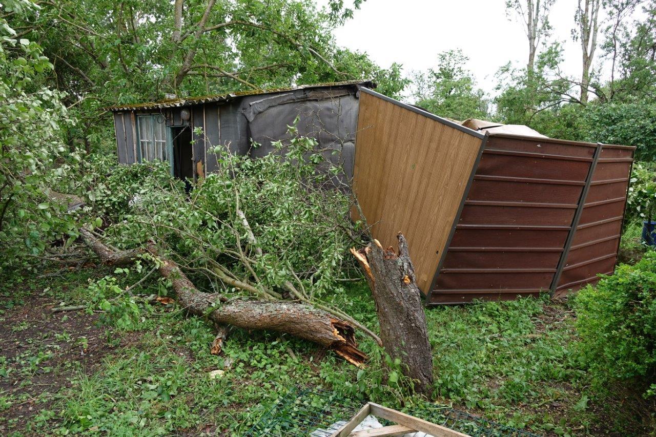 Arbres déracinés, cassés : la tornade a fait le tour des jardins...