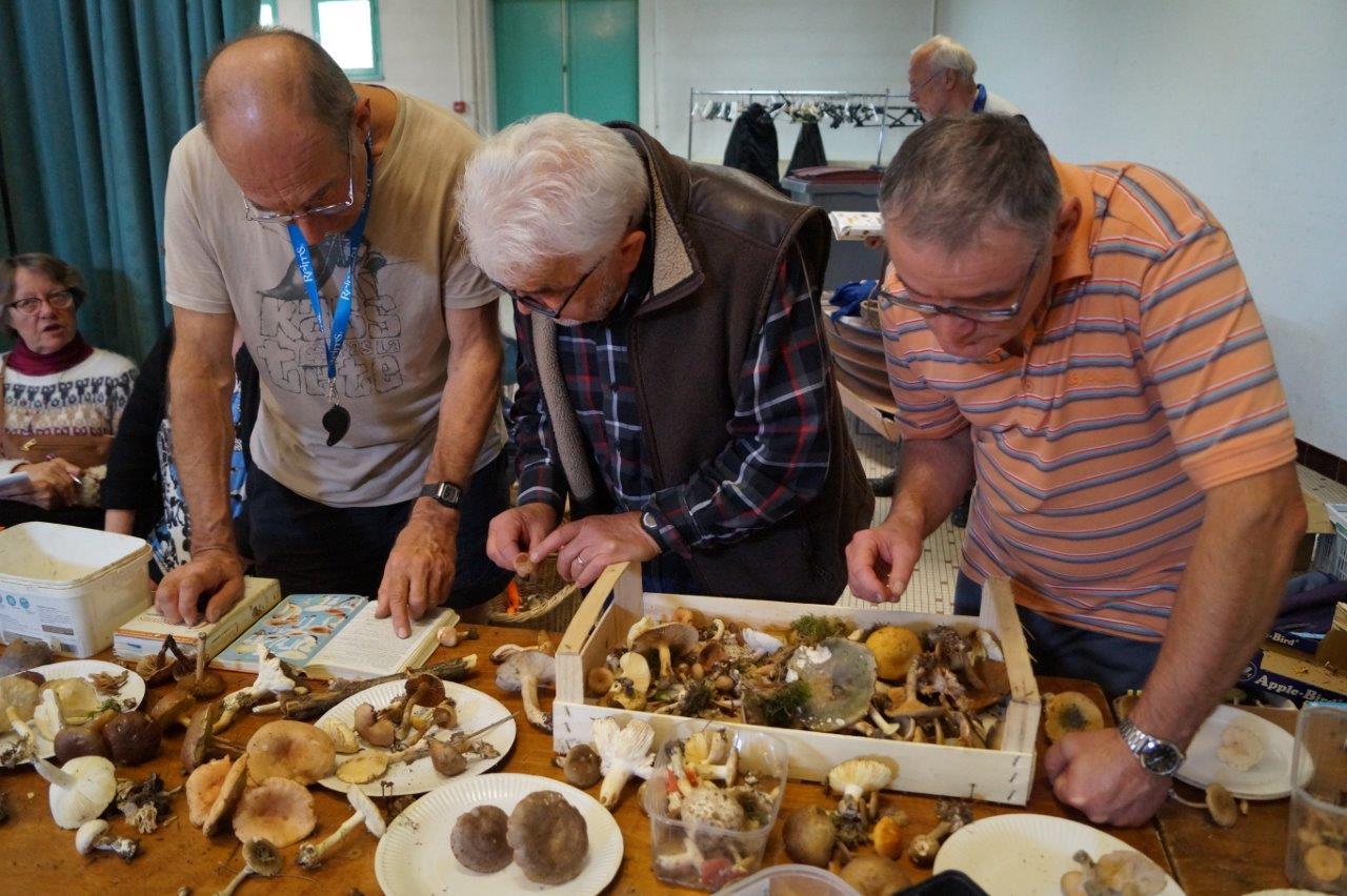 Les adhérents de la Société mycologique de Reims auscultaient minutieusement les champignons apportés par des visiteurs.