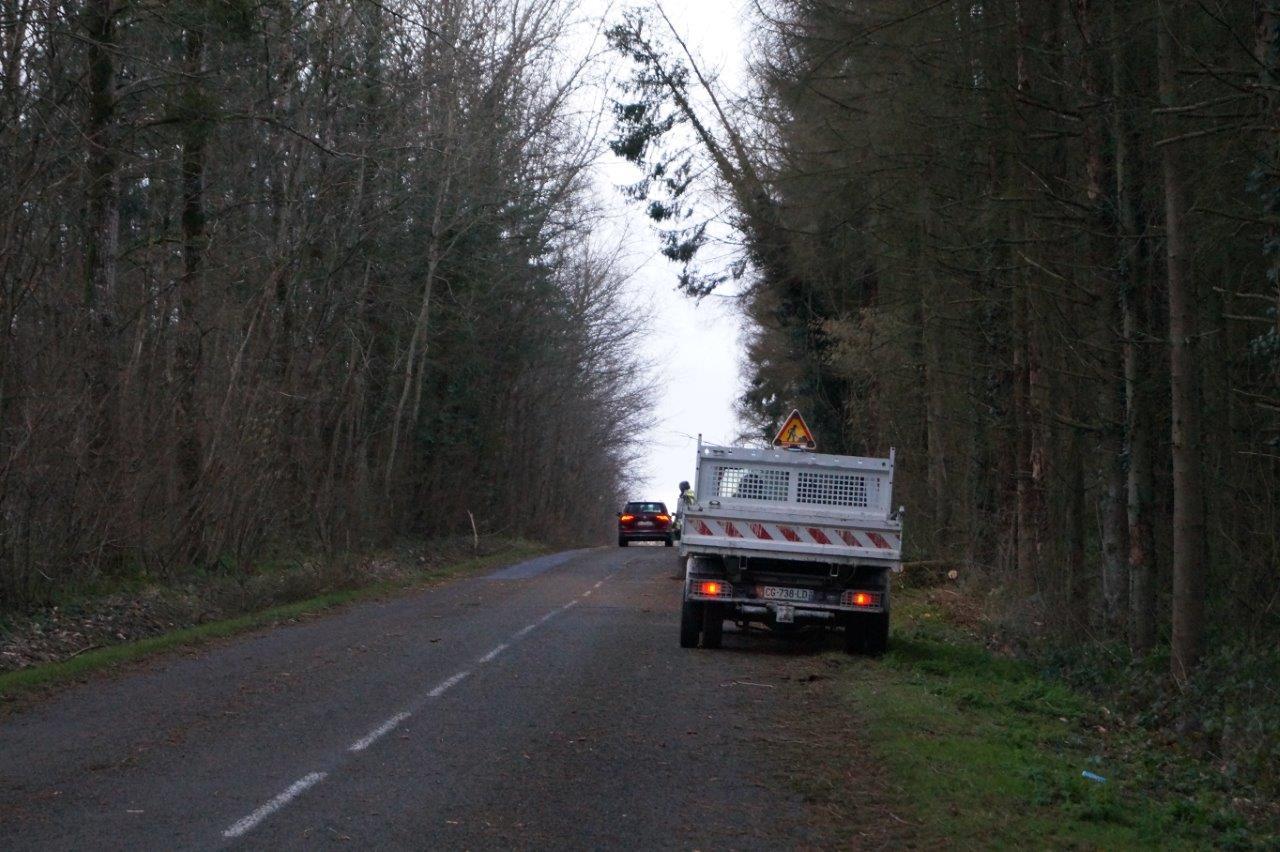 Les services techniques de la Ville de Dormans procèdent également à l'abattage de sapins dangereux...
