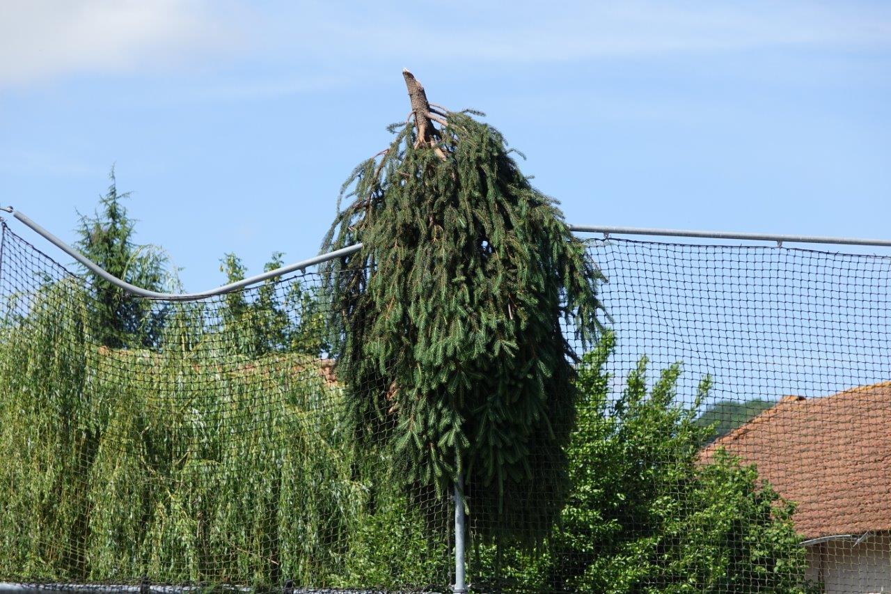 La tête d'un sapin a atterri sur la clôture de l'aire jeux située Espace de Sade.