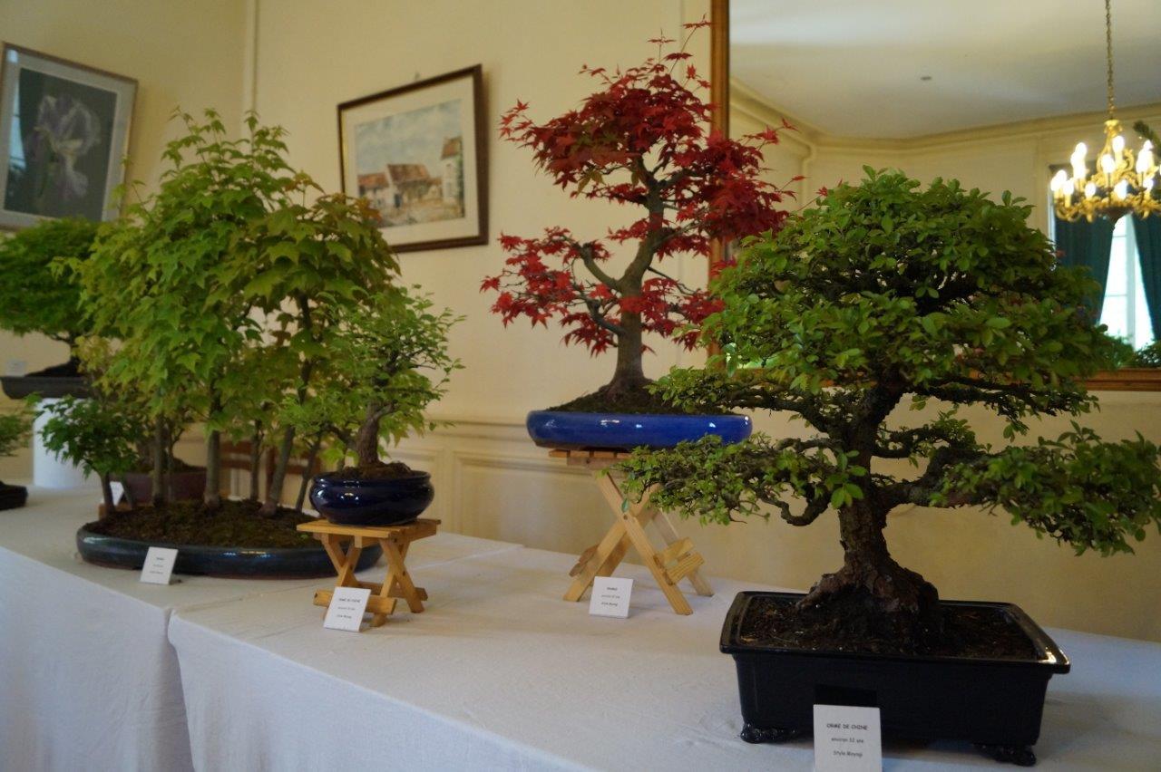 Une collection privée de bonsaïs a émerveillé les visiteurs.