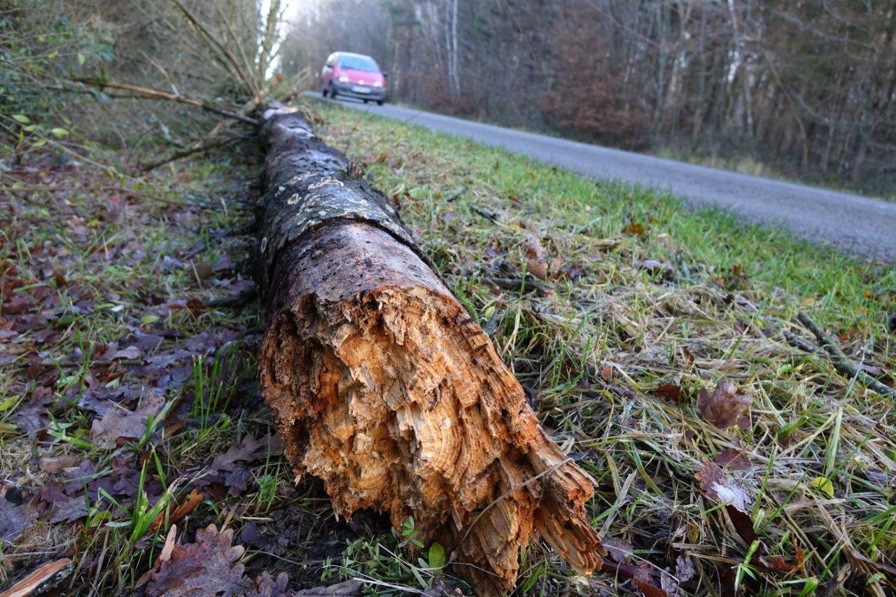 La semaine dernière, ce sapin, d'environ 9 mètres, s'est écroulé sur la route à la tombée de la nuit...