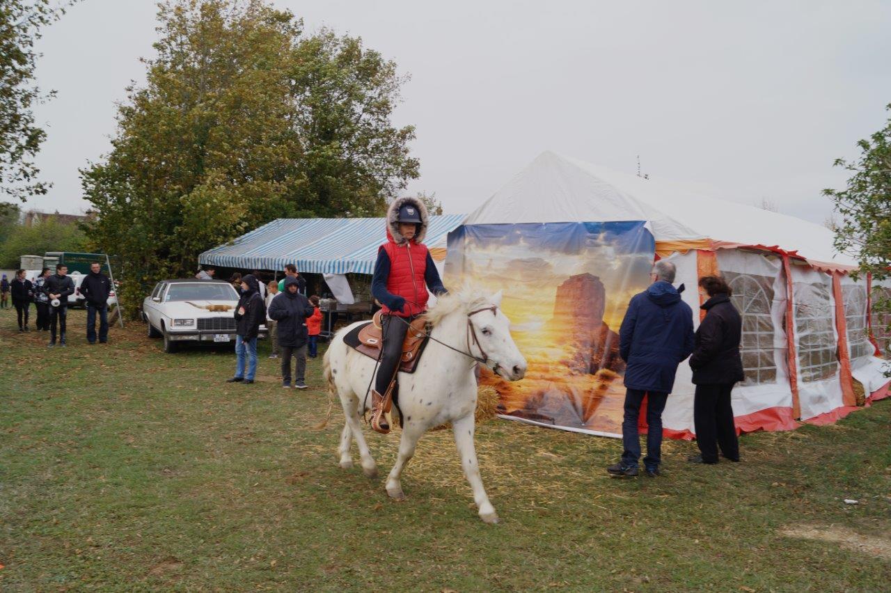 Emy Reining Horses...