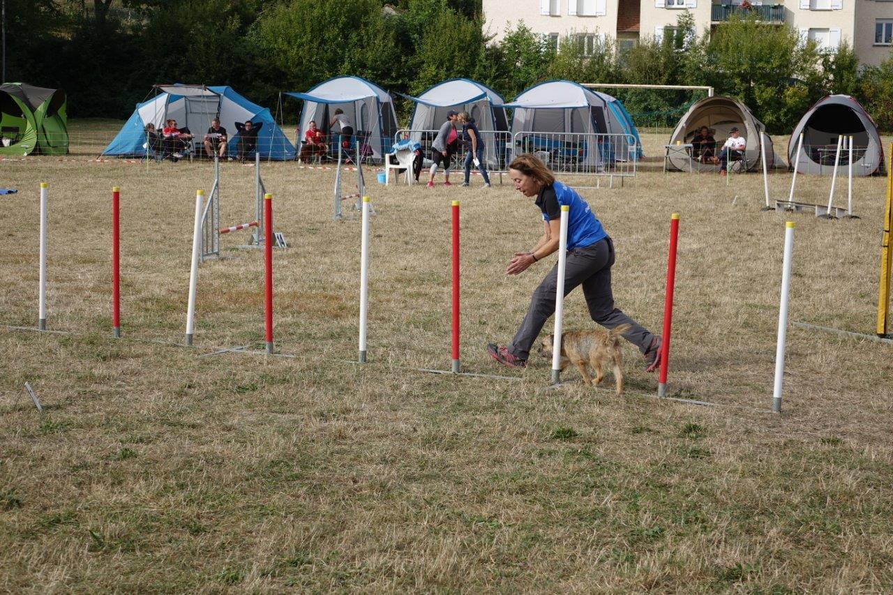 En slalom, le chien doit rentrer avec le premier piquet à sa gauche et franchir l'ensemble sans sauter aucune porte.