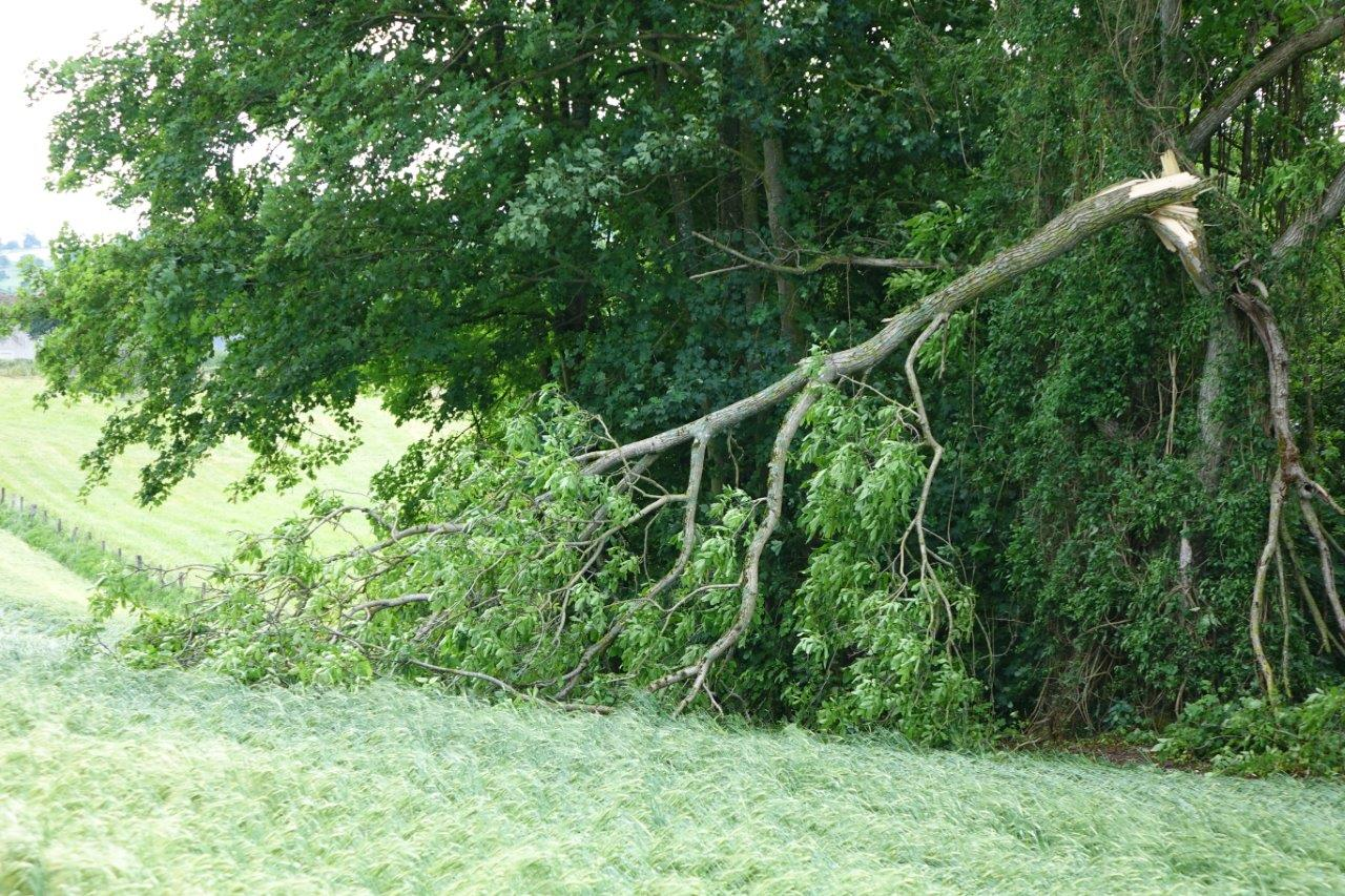 De nombreux arbres ont souffert du passage de la tornade...