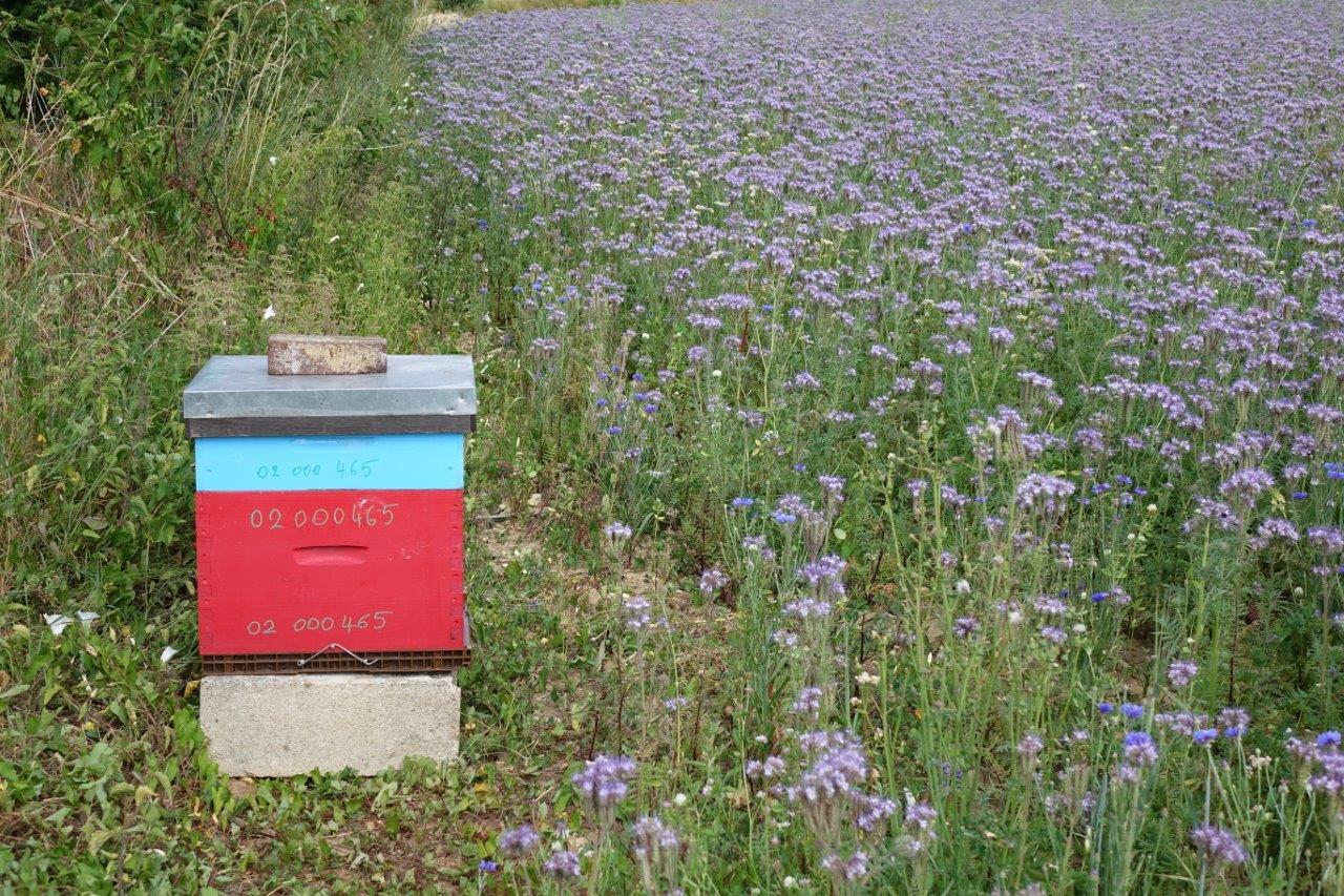Chaque soir, les abeilles ferment la ruche sur les coups de 20h00...