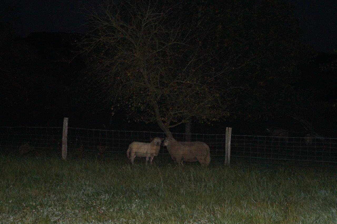Le jour, les vaches regardent passer les trains. La nuit, les moutons regardent passer les marcheurs.