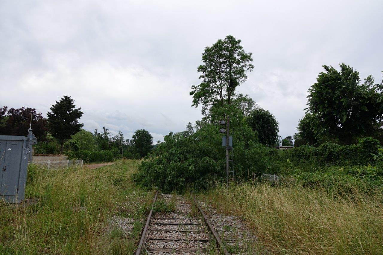 Un arbre de l'école élementaire de Condé-en-Brie est tombée sur la voie ferrée 22².