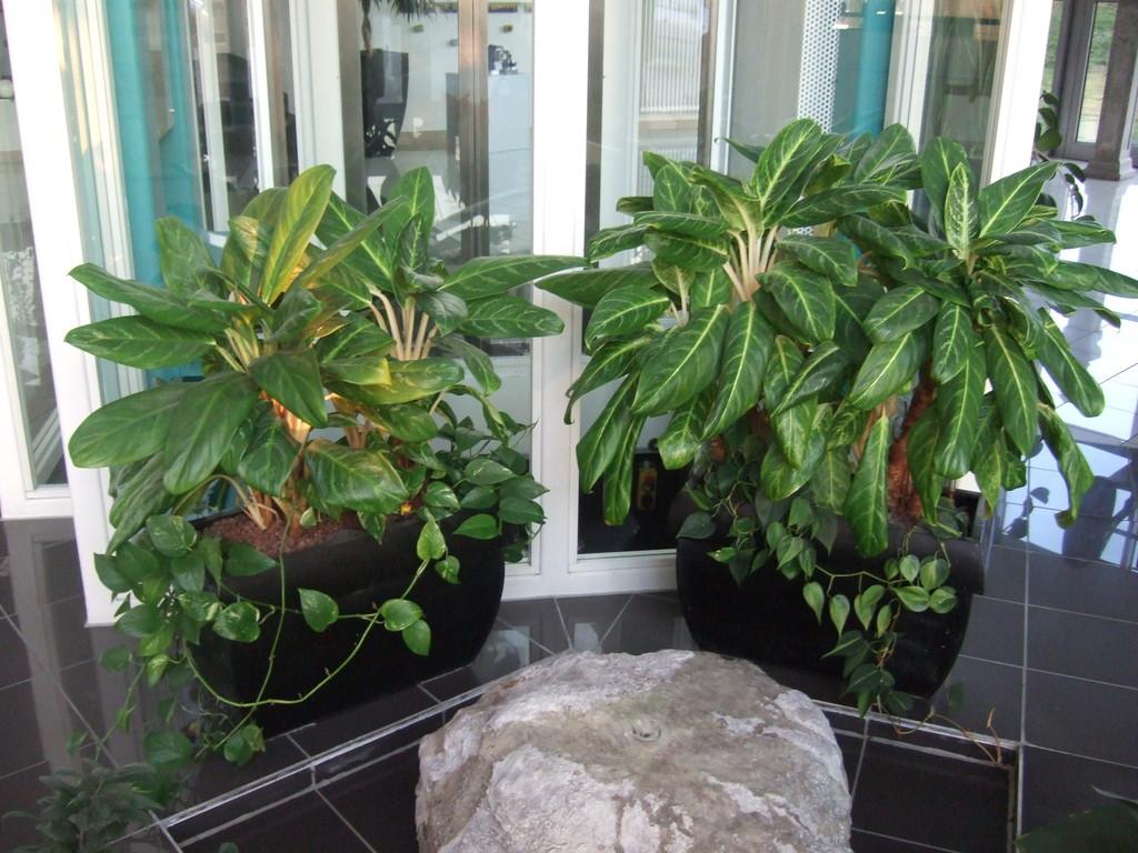Hydrokultur g rtnerei blumen schreiber lauda unterbalbach for Hydrokultur pflanzen