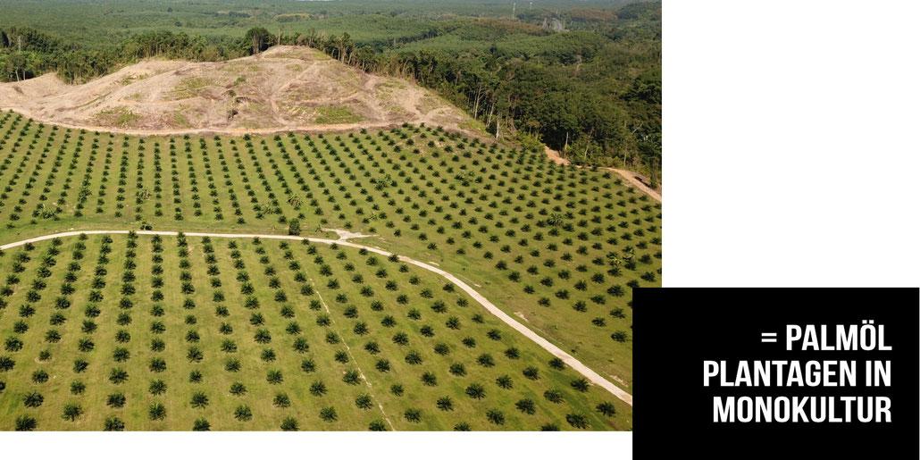 Um immer mehr Palmöl das in Kosmetik und Lebensmittel verwendet wird anzubauen, roden und verbrennen die großen Palmöl-Produzenten die letzten verbleibenden Regenwälder.
