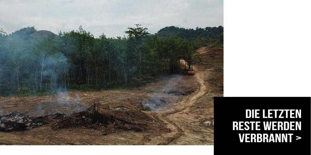 In Borneo und Sumatra, ihren letzten verbliebenen Rückzugsgebieten, sind große Teile des Regenwaldes für Palmöl Plantagen vernichtet worden.