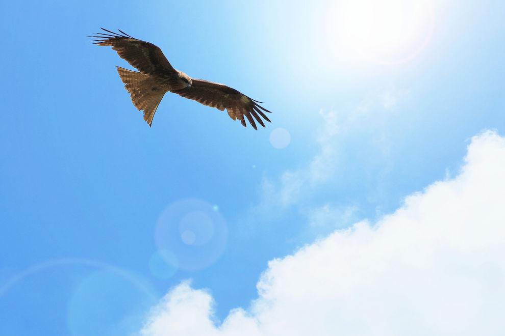 ◆◆自分を拾う、夢を運ぶ◆◆