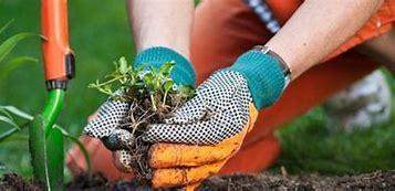 Préparer son jardin pour l'arrivée du printemps