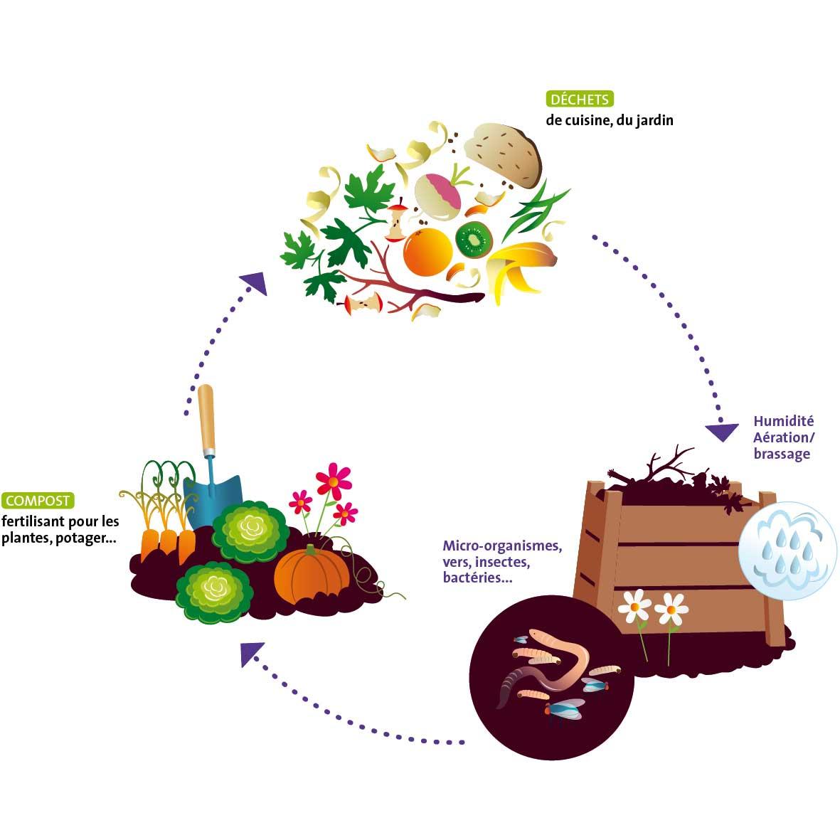 Compost et biodéchets