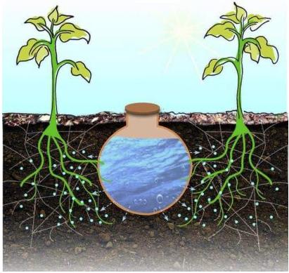 Les jarres d'irrigation ou oyas