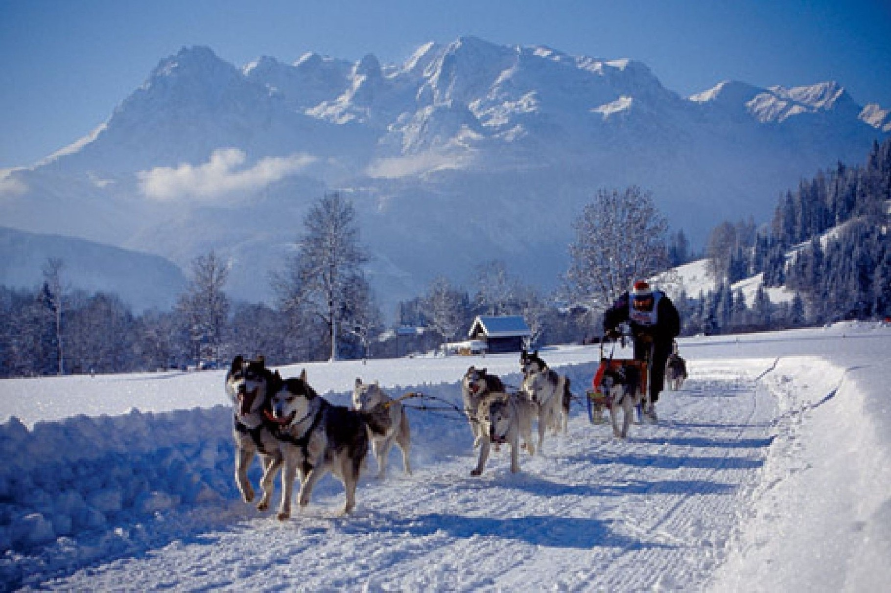 Bild: Das alljährliche Schlittenhunderennen findet im Januar statt