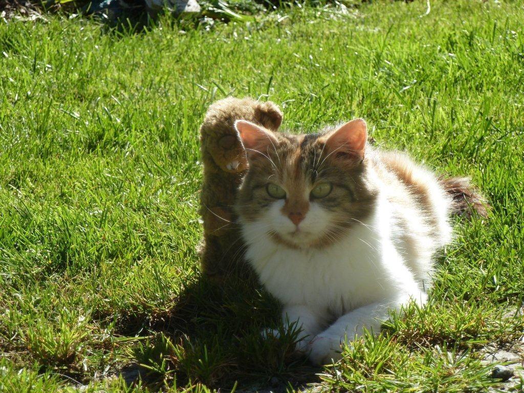Unsere Kleintiere für die Kinder -   Katze Lilly