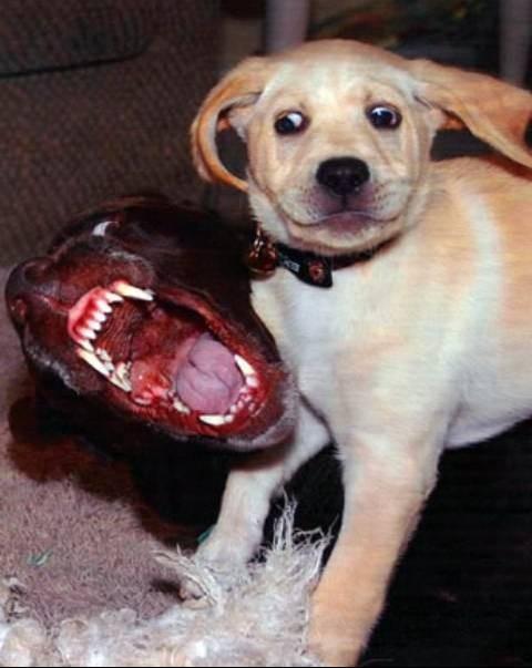 questi due cani stanno giocando...ma l'aspetto è davvero pauroso...