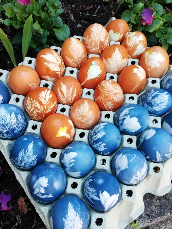 Eierfärben mit Kräutern