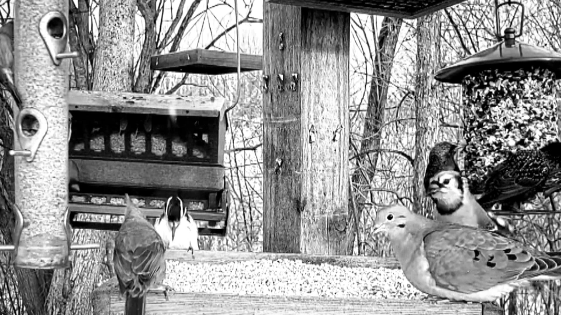 #32 Sparrow feat. Tom Gsteiger