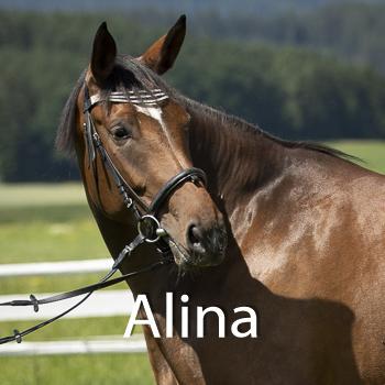 Alina-B
