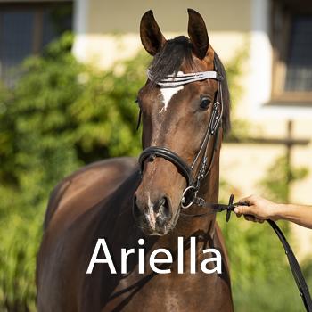 Ariella-B