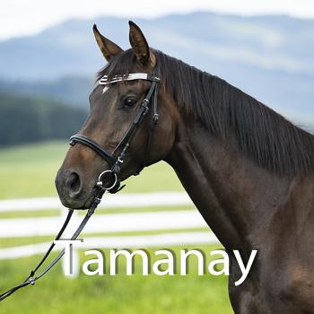 Tamanay