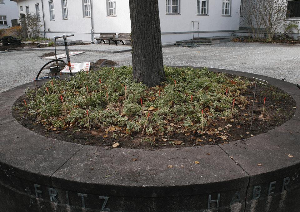 VORHER: Baumscheibe (November 2016)