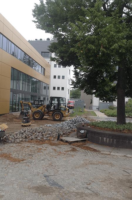 VORHER: Fritz-Haber-Linde (Juli 2016)