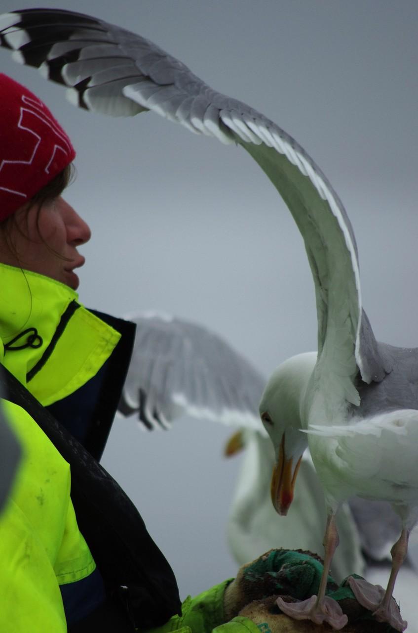 ... denn die sollen die Seeadler aufmerksam machen...