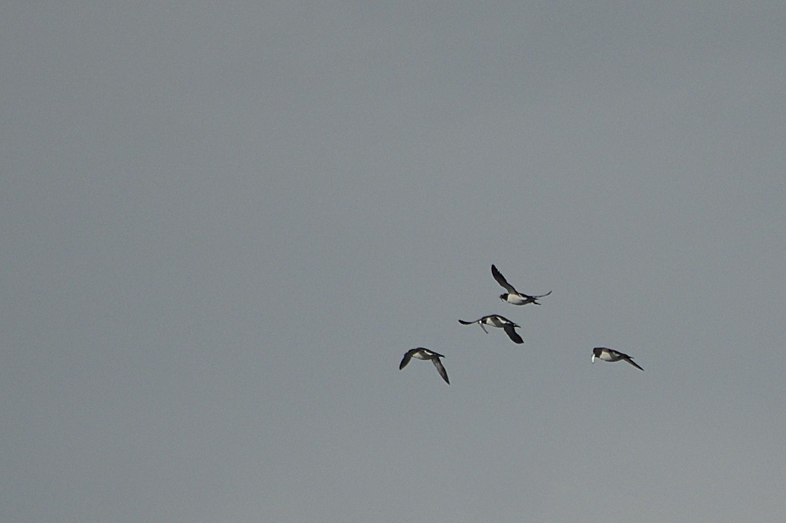 die Vogelwelt ist fleißig am Futter sammeln ...