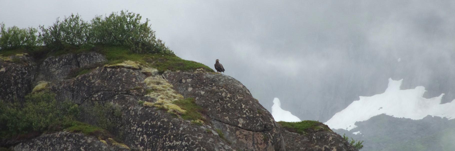 ...oder sie sitzen majestätisch in der Landschaft