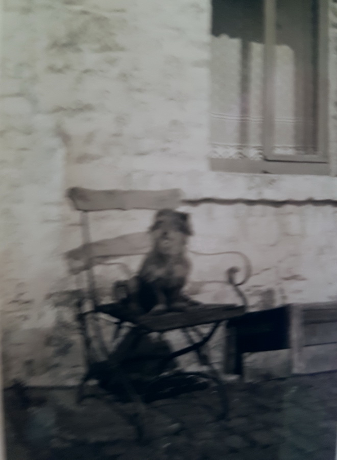 Dackel Waldi 1955
