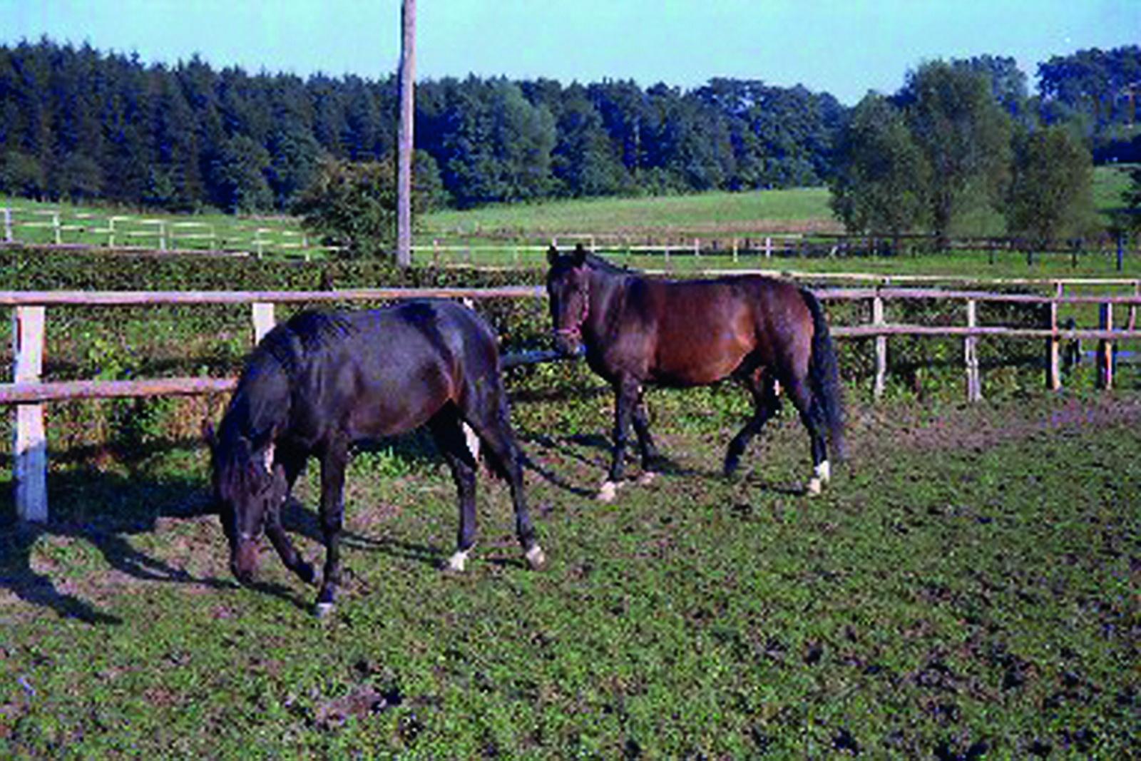 Pferde von Jüppchen Bauens