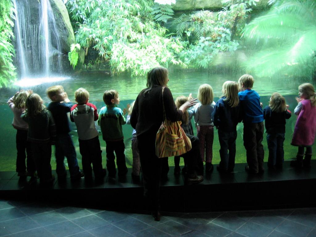Viele Ausflüge werden gemacht, zum Beispiel in den Zoo