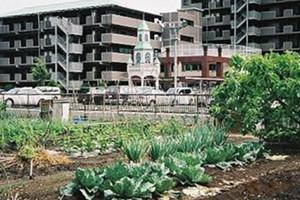 市民農園は都市の中の緑の空間災害時には避難場所にもなる