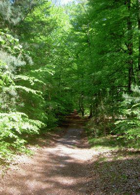 Waldweg in Richtung Schloss Dammsmühle - tolle Buchenbestände!