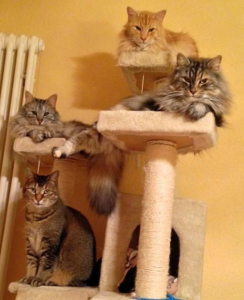 katzenbetreuung bern kleintierbetreuung bern