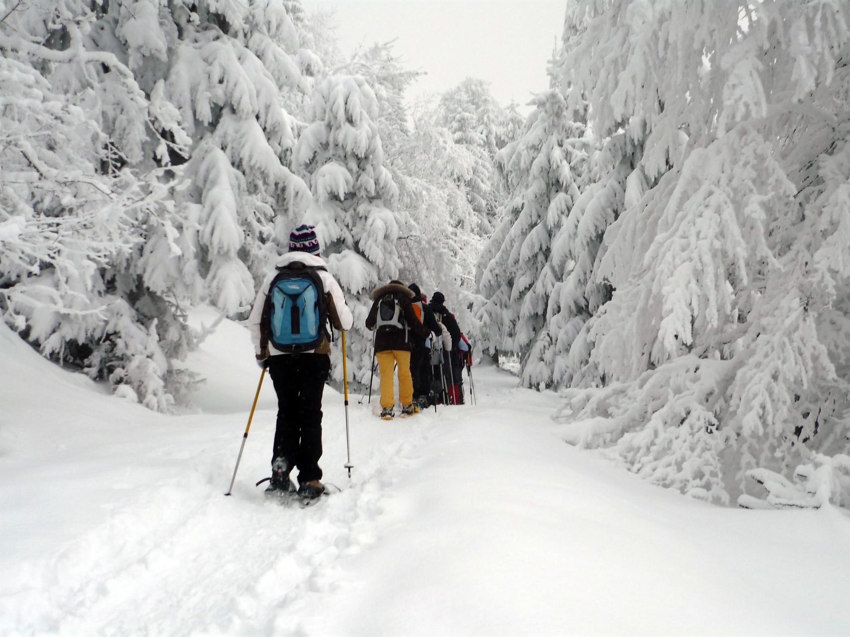 Raquettes & Ski de fond - journée