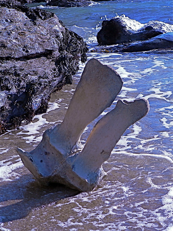 vertèbre de baleine échouée